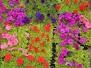 10 тысяч цветов высадят в Парке КиО им.П.М.Зернова
